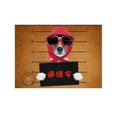 Wanted? DOG Bügelbild