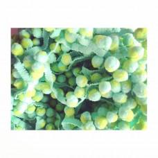 Pompomband Mint*Lime